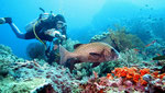 Diving and Snorkeling - Marine Attractions