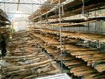 キハダ等の皮の干し場。取引先の立石商店の干し場