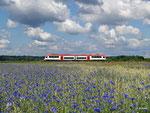 Am 15. Juni 2014 ist VIA 25125 auf dem Weg nach Erbach im Odenwald. Die blühenden Kornblumen bei Hainstadt bieten dabei den perfekten Rahmen für ein Sommerbild.