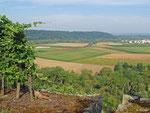 Der Blick aus den Weinbergen fällt auf eine 185, die mit ihrem unbeladenen Autotransportzug durch die Felder bei Lauffen (Neckar) rollt (01.08.2014).