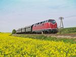 V200 033 pendelt am 29. April 2012 mehrfach mit ihrem historischen Sonderzug zwischen Glauburg-Stockheim und Büdingen. Hier ist sie zwischen Rohrbach und Büches unterwegs.