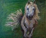 Cheval sauvage de Hongrie. 65x54.