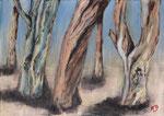 Eucalyptus à Porquerolles  70X50
