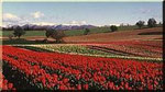 Printemps en Provence