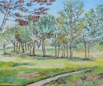 Panorama 1   50 x 60