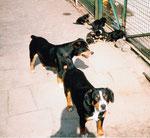 Aika und Ira mit dem B- Wurf genießen die Sonne