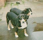 Aika und Ira.. Was für ein Hundewetter