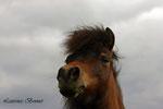 Westwind Farms Atitude of Duchess