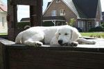 an Deck :-)