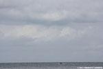 Tuba au-dessus du port artificiel d'Arromanches, plages du débarquement (14)