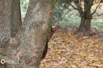 31 octobre: Si tu bouges, j'me sauve dans l'arbre....