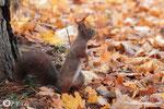 11 novembre: ''Wouah!! Ca sent la noisette par là''