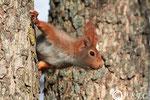 24 mars 2012: L'écureuil prend quelques jours de vacances...