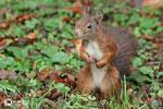 28 octobre: Bizarre, ça sent l'écureuil mouillé.