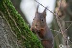 15 décembre: '' Y'a pas que les noisettes dans la vie, les noix c'est pas mal non plus''