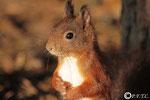 24 octobre:Qui qu'a dit qu'un écureuil souriait jamais?