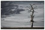 L'arbre, Salvenach