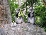 scimmie rovine di gede