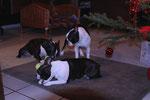 Cani, Darti & Drusi, wo ist die Kleinste versteckt ;-)