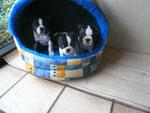 Cani und Geschwister