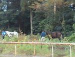 走路を引き馬