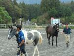 馬場を引き馬