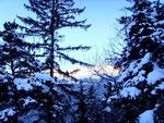 Fichtenzauber im Winter
