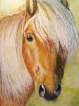 Star Dreamer Miniature Horse, Pastellkreide mit Aquarelluntermalung, ca. 30 x 40 cm, Fotovorlage: Vivien Malony, paintmyphoto.ning.com