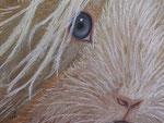 Gipsy. Pastellkreide, ca. 30 x 40 cm auf Zeichenkarton. Fotovorlage: eigene