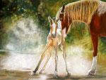 Born Today. Pastellkreide, ca. 30 x 40 cm, Fotovorlage: Janina Suuronen, paint-my-art.com