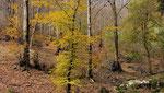 Autunno i colori del bosco , Cragno , Mendrisiotto , Ticino , Svizzera.  Info; Nikon D3S + 24-70mm f2.8 Nikon a 50mm a f10  1/125 a ISO 500 + polarizzatore