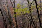 Autunno i colori del bosco , Cragno , Mendris