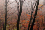 Colori d'autunno , Cragno , Mendrisiotto , Ticino , Svizzera. INfo; Nikon D3S + 24-70mm f2.8 a 38mm a  f10 1/100 a ISO 800 + polarizzatore