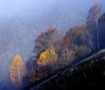 Val Luasca , Valle di Muggio , Ticino , Svizzera . Info; Nikon D3S + 24-70mm f2.8 Nikon a 58mm a f11  1/640 a ISO 500 + filtro degradante 0.6