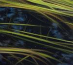 Andreas Leißner: *Wasserpflanzen I*, 2014, Öl/Hartfaserplatte, 11 x 12 cm