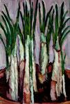 Bettina Moras: *Krokus I*, 2009, Öl/Nessel, 60 x 40 cm