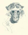 Pavel Feinstein: *Zoo 25.5.18*, 2018, Buntstift/Papier, 21 x 29,7 cm