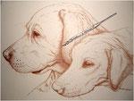 unsere Labradore Sammy und Lena