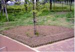 2007年05月 植栽を待つ第3花壇