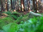 Harzwald