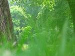 Wald hinter Gras