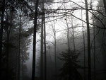Nebeldämmerung im Wald