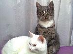 Schaufenster-Katzen