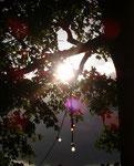 Lampen, Himmel, Baum