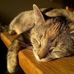 Katze Tummy, bei ihrer Lieblingsbeschäftigung