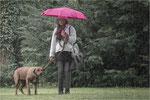 Hundewetter. Bildformat: 3/2