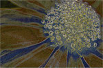 Aster abstrakt. Bildformat: 3:2