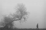 Spaziergand im Nebel. Bildformat: 3:2