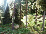 Lichtdurchfluteter Wald