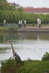 """Ein Reiher steht am Ufer des """"Karpfenteich"""", Schlosspark Charlottenburg. Foto: Helga Karl"""